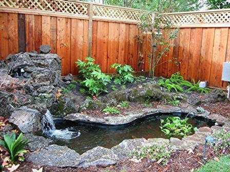 433 kirkham street tamate landscaping for Koi pool kirkham