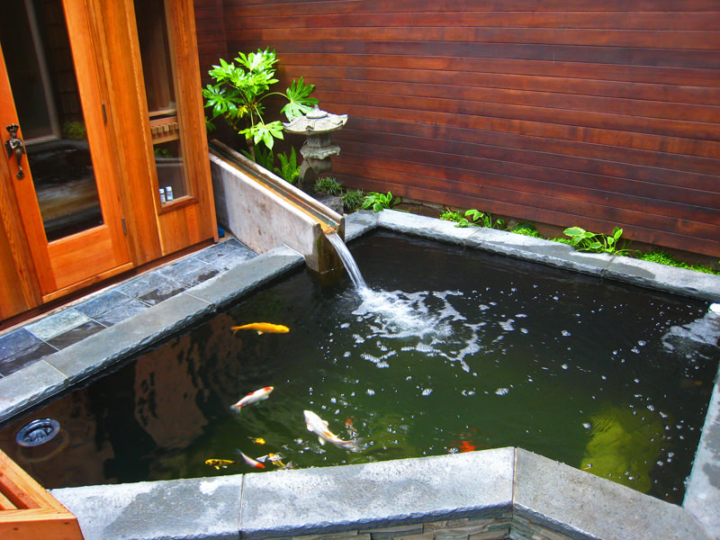 Best koi pond filter system for Koi filtration systems