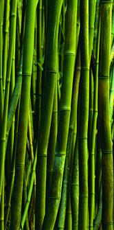 bamboo landscaping feature