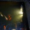koi pond underwater lighting