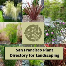 San Francisco Plant Directory for Landscaping